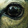 Christophe Drochon : L'oeil de biche